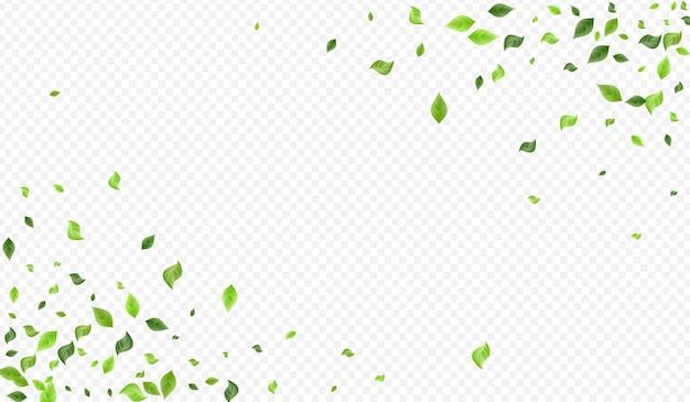 Bannière de fond transparent vent verdure olive