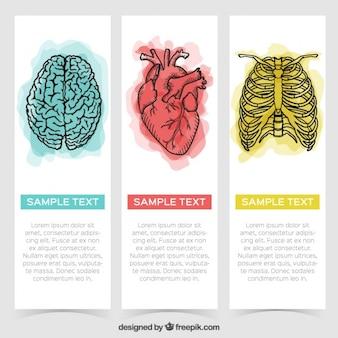 Bannières aquarelle avec des dessins d'organes et de nervures
