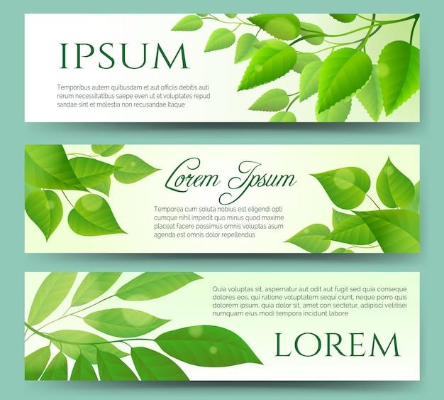 Bannières de feuilles vertes
