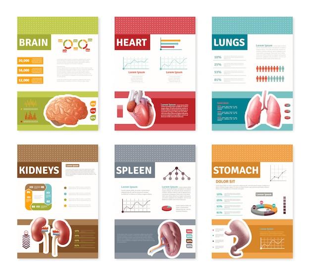 Bannières d'organes humains internes