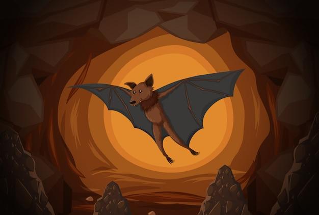 Bat dans une grotte