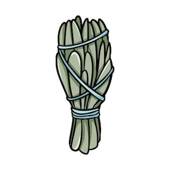 Bâton de maculage de sauge avec icône isolée de doodle dessinés à la main de fils. image de feuilles de plantes de stock de vecteur. botte d'herbes de sauge blanche