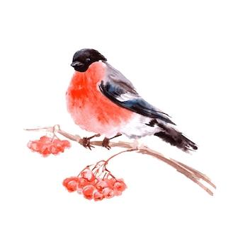Beau bouvreuil sur une branche avec une carte de noël et du nouvel an en frêne rouge modèle vectoriel