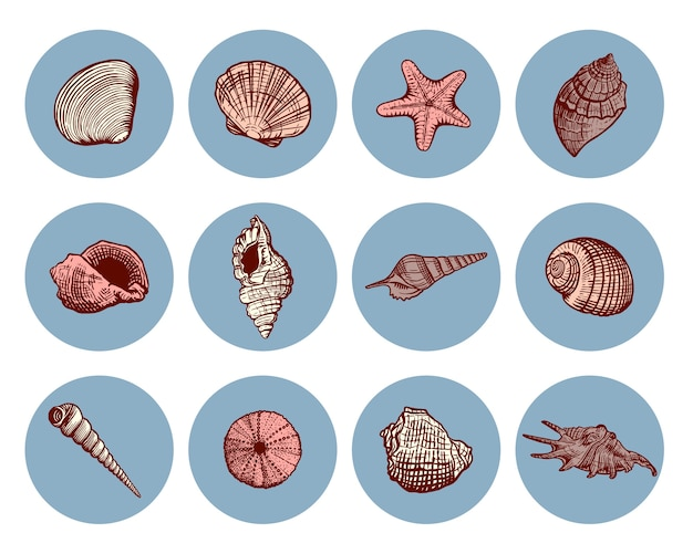 Beau jeu d'icônes de coquille de mer dessinés à la main. collection marine de coquillage dans le style de croquis