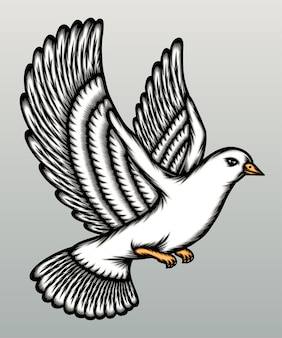 Beau pigeon blanc isolé sur gris