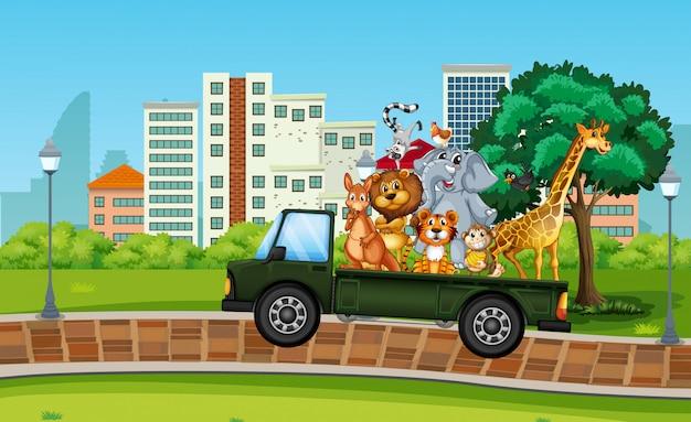 Beaucoup d'animaux sauvages sur le camion