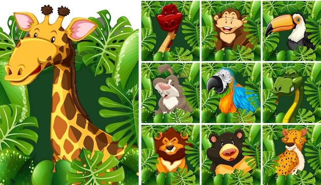 Beaucoup d'animaux sauvages derrière le buisson vert