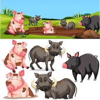Beaucoup de cochon en sauvage