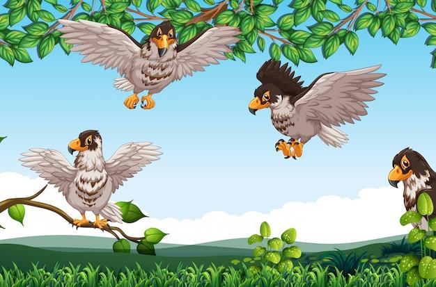 Beaucoup de faucon dans la nature