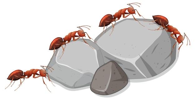Beaucoup de fourmis sur des pierres sur fond blanc