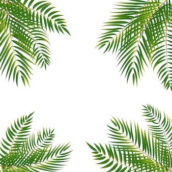 Beautifil palm tree leaf silhouette background illustrat