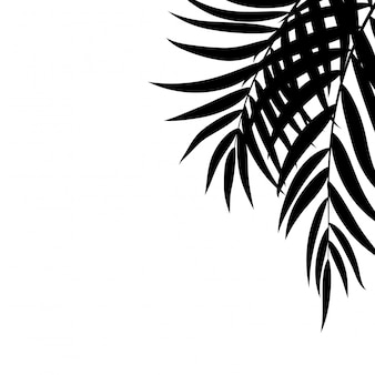Beautifil palm tree leaf silhouette background