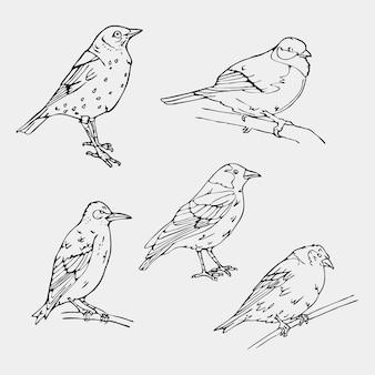 Beaux oiseaux dessinés à la main