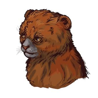 Bébé puma, portrait de croquis isolé animal exotique. illustration dessinée à la main.