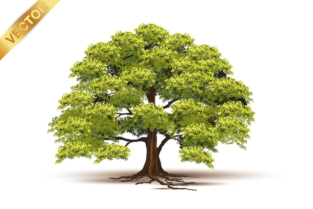 Bel arbre réaliste sur fond blanc