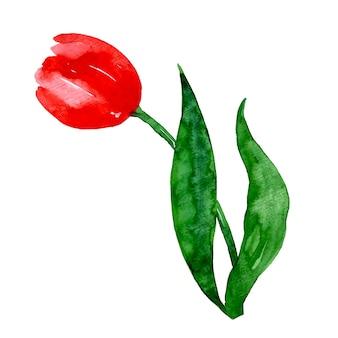 Belle aquarelle florale et feuilles