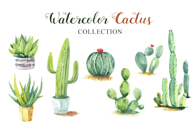 Belle collection de cactus à l'aquarelle.