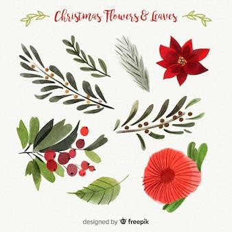 Belle collection de fleurs et de feuilles de Noël