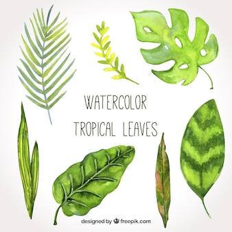 Belle collection de feuilles tropicales aquarelle