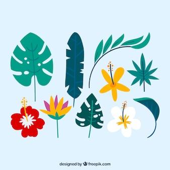 Belle collection de feuilles tropicales avec un design plat