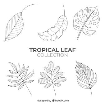 Belle collection de feuilles tropicales dessinés à la main