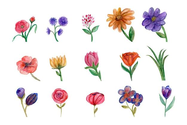 Belle collection de fleurs avec pola motif aquarelle
