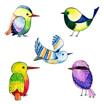 Belle collection d'oiseaux exotiques aquarelle
