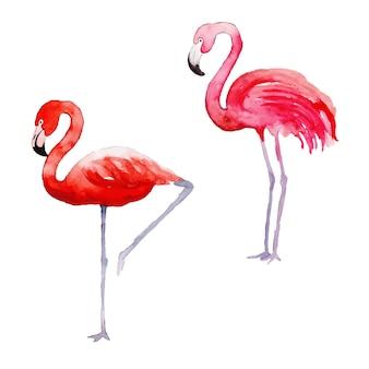 Belle collection d'oiseaux tropicaux aquarelle