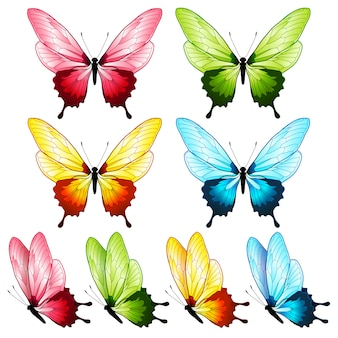 Belle collection de papillons, quatre couleurs