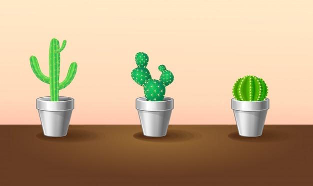 Belle collection de plantes exotiques