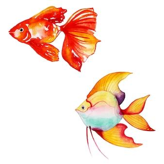 Belle collection de poissons aquarelle