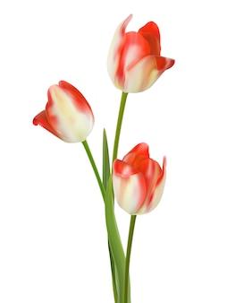 Belle fleur sur fond blanc.