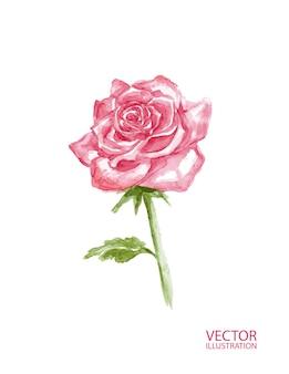 Belle fleur rose isolée sur fond blanc.