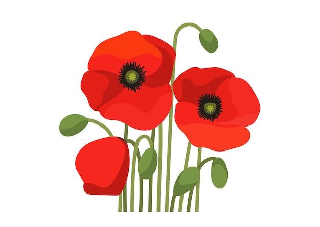 Belle illustration de coquelicots fleuris