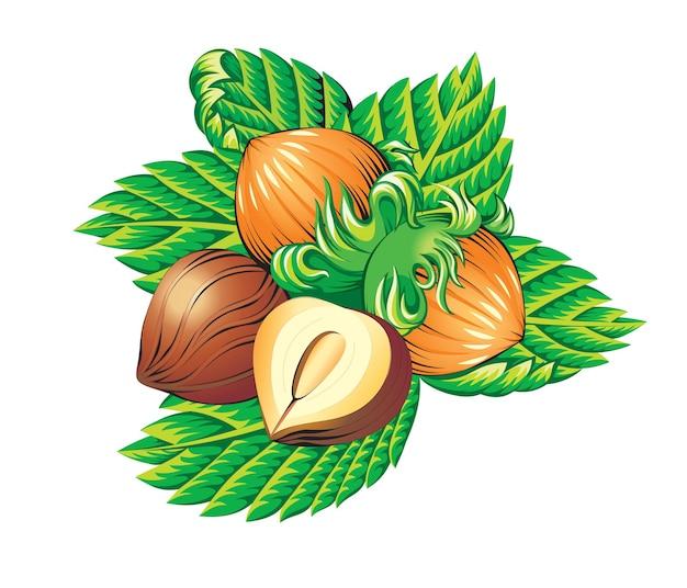 Belle illustration de noix isolé