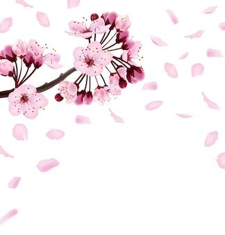 Belle impression avec des fleurs de sakura rose foncé et rose clair fond de printemps