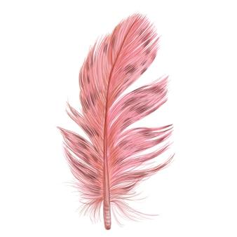 Belle plume colorée