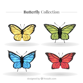 Belle série de papillons réalistes