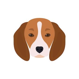 Belle tête de chien barbu beagle