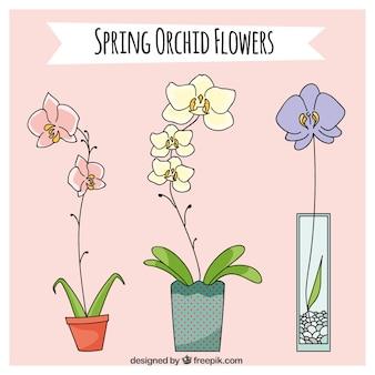 Belles fleurs au printemps d'orchidées