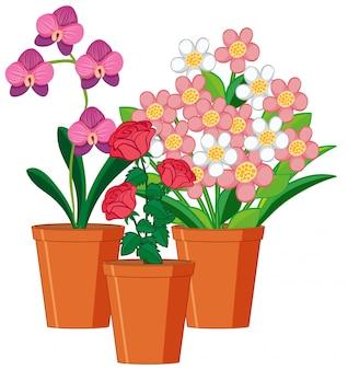 Belles fleurs dans le jardin sur fond blanc