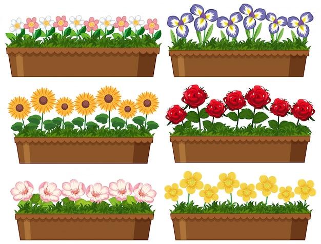 Belles fleurs dans des pots en argile sur fond blanc