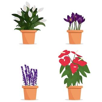 Belles fleurs en pots. plantes en pots