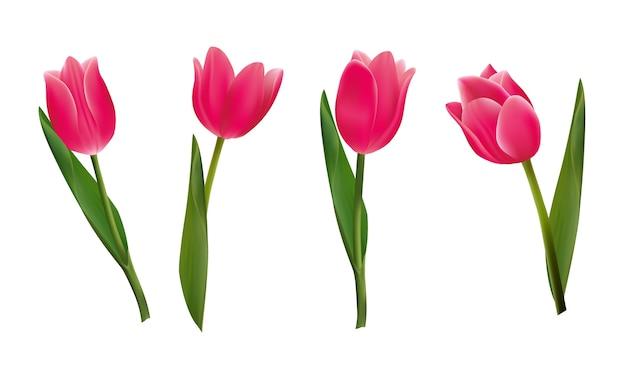 Belles fleurs de tulipes roses.