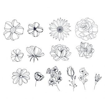 Belles roses dessinées à la main