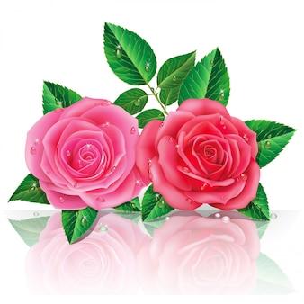 Belles roses roses.
