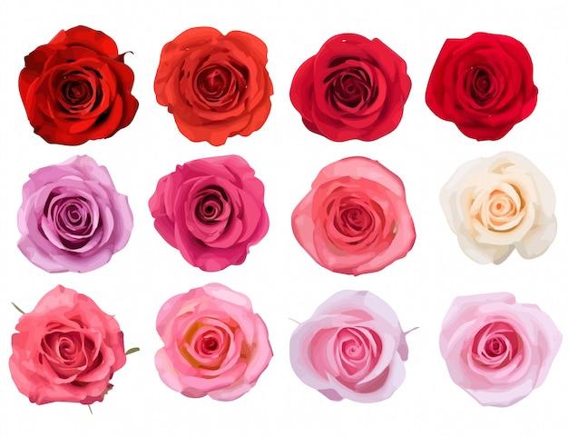 Belles roses en rouges, roses et blancs. fleurs de roses isolées