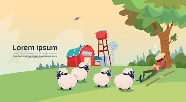 Berger paysan élevage de moutons ferme de laine