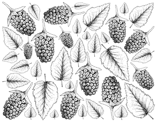 Berry fruits illustration wallpaper de croquis dessinés à la main