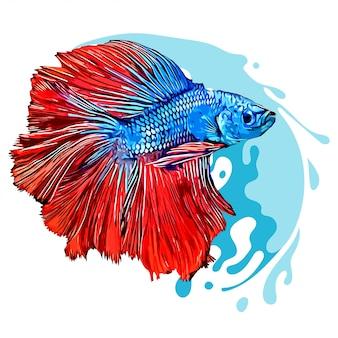 Betta poisson illustration dessinée à la main isolé fond blanc